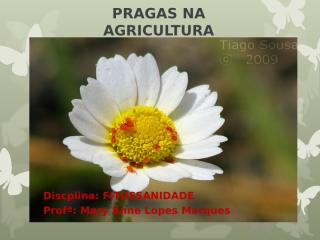 pragas na agricultura insetos.ppt