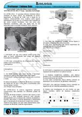 UFMG20112etapa.pdf